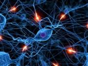 İlon Mask: İnsan beynini dörd il ərzində kompüter ilə əlaqələndirmək mümkün olacaq