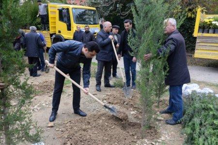 Nəsimi rayonunda Yaşıl Marafon layihəsi çərçivəsində ağacəkmə aksiyası keçirilmişdir